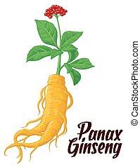 folhas, ginseng., raiz, panax
