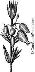 folhas, heather, erica, engraving., sino, ou, flores, ...