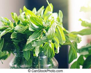 folhas, hortelã, luz solar