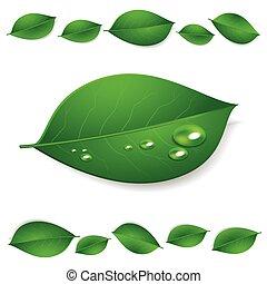 folhas, isolado, textura, água, realístico, experiência verde, branca, gotas