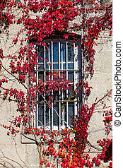 folhas, janela, barras