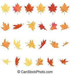 folhas, jogo, maple
