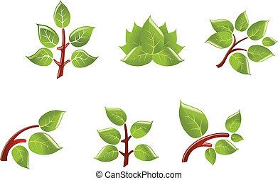 folhas, ligado, ramo