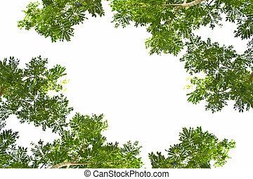 folhas, ligado, um, fundo branco