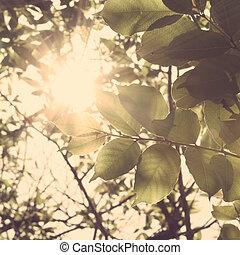 folhas, luz solar