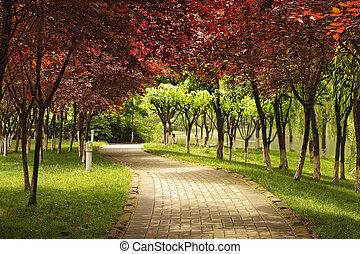 folhas, maple, caminho, vermelho, sob