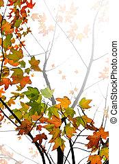 folhas, maple, fundo, outono