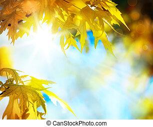 folhas, maple, outono