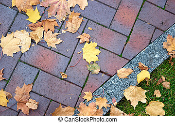folhas, maple, secos, outonal, cobblestones., passagem