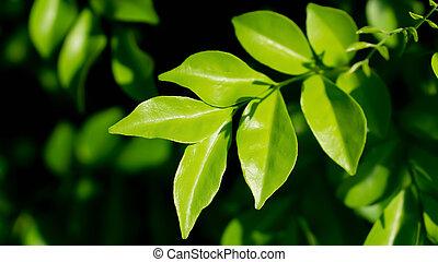 folhas, natureza, primavera, fundo, fresco, verde