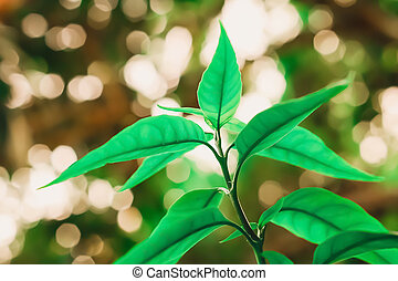 folhas, natureza, primavera, fundo, verde, papel parede
