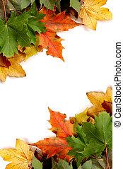 folhas, outonal, coloridos