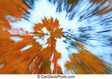 folhas, outono, de, árvores, em, a, madeiras