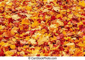 folhas, outono, outono, laranja, vermelho, chão