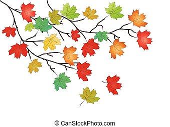 folhas, -, outono, vetorial, fundo, maple