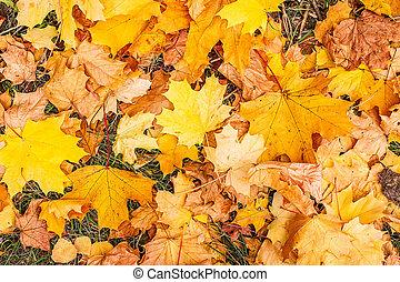 folhas, parque, amarela