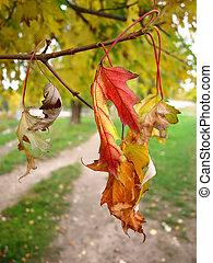 folhas, parque, outono, secos