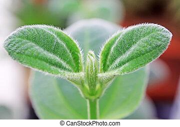 folhas, planta verde
