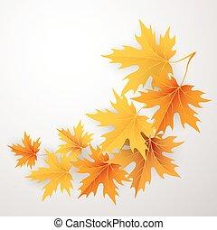 folhas, queda, experiência., maples, outono