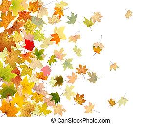 folhas, queda, maple