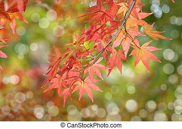 folhas, raso, muito, foco, outono