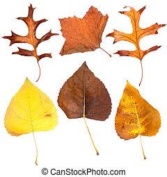 folhas, seis, outono