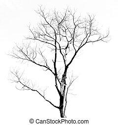 folhas, sem, árvore, morto
