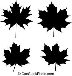 folhas, silueta, maple