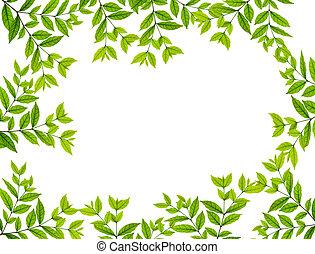folhas, sobre, fundo branco