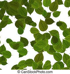folhas, sobre, verde branco, fundo