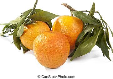 folhas, tangerina, isolado, verde, frutas, fresco