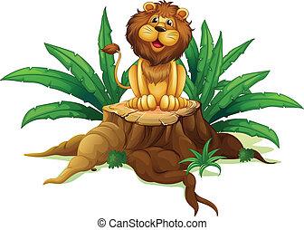 folhas, toco, leão, sentando