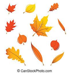 folhas, variado, outono