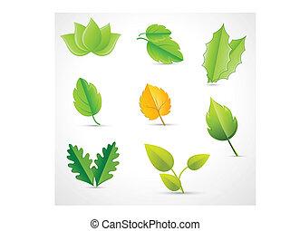 folhas, vectors