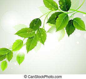 folhas, verão, verde