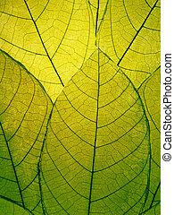 folhas, verde, delicado, detalhe