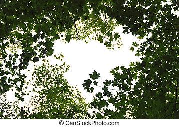 folhas, verde, quadro