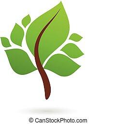 folhas, verde, ramo