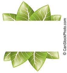 folhas, vetorial, experiência verde, branca, quadro