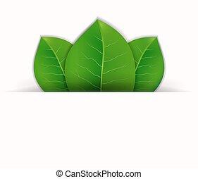 folhas, vetorial, experiência verde