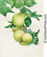 folhas, vetorial, maçã, ramo