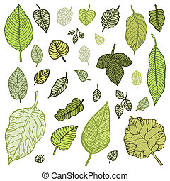 folhas, vetorial, verde, set., illustration.