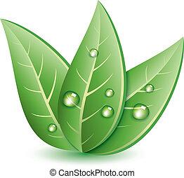 folhas, vetorial, verde, waterdrops