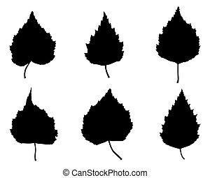 folhas, vidoeiro