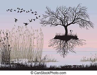 folhas, voando, árvore, maçã, sem
