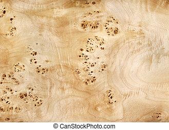 folheado, poplar, madeira, raiz
