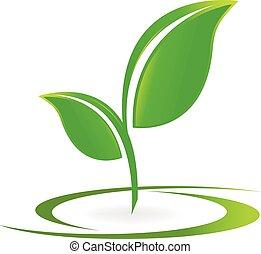folheia, saúde, natureza, logotipo, vetorial