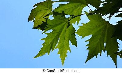 Foliage against the blue sky