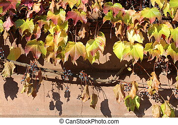 Foliage and berries on brick wall