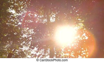 Foliage and bright sun.